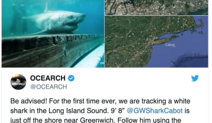 Great White Shark Tracked In Long Island Sound For First Time Ever, Says Ocean Research Group