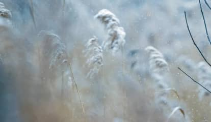 Fall's First Frost Advisory Issued For Parts Of Region