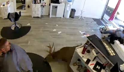 Video: Deer Crashes Through Window Of Hair Salon