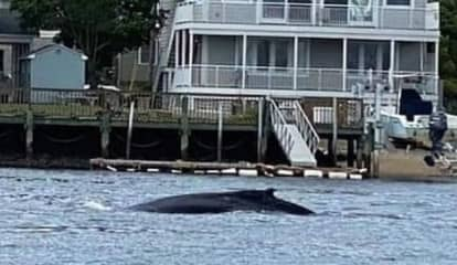 Boaters Urged To Avoid Portion Of NJ River Where Humpback Whale Spotted Swimming