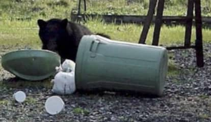 Grin, Bear It: Recent Rise In Hudson Valley Sightings Prompts Warning From Officials