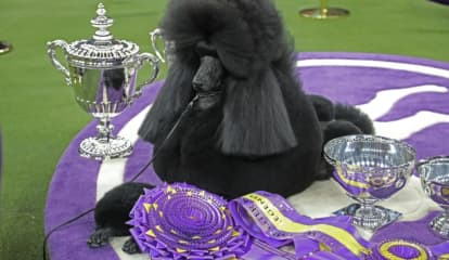 Famed Westminster Kennel Club Dog Show Coming To Hudson Valley