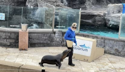 Woman Jumps Into Sea Lion Tank At Aquarium In New York