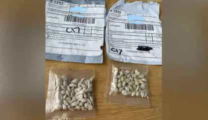 Mysterious Seed Packets Arriving In Mail Could Be A Scam - Don't Plant Them