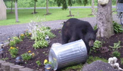 Man Injured By Black Bear While Checking Noise Outside Home In Area