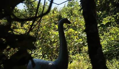 Westchester's Lasdon Park Home To Dinosaur Garden