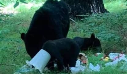 Bear Cub Rescued After Food Bucket Gets Trapped On Its Head, NY State DEC Says