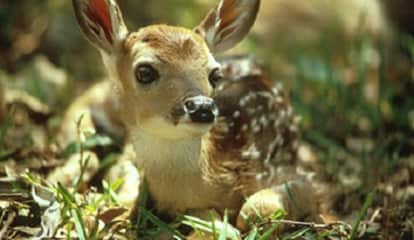 Don't Fawn Over It: Here's What To Do If You Spot A Baby Deer All Alone
