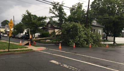 Storm Downs Trees In Hawthorne, Glen Rock