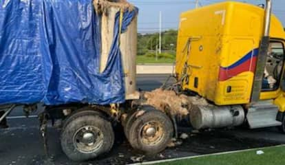 Fowl Smell: Truck Spills Decomposed Chicken Carcasses Along Route 17