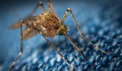 NJ Man Dies Of West Nile Virus