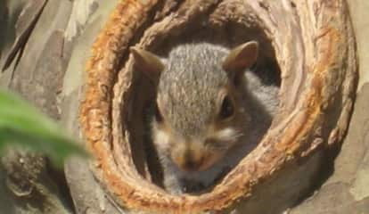 Rogue Rodent: Squirrel Blamed For 12K Losing Power Upstate