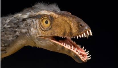 Drive-Thru Dinosaur Exhibit Coming To Connecticut