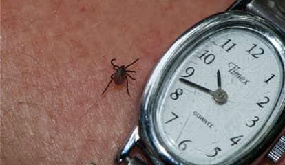 Case Of Tick-Borne Powassan Virus Reported In Ridgefield, New Canaan