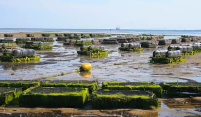 Can Oysters Solve This Long Island Town's Water Problems?