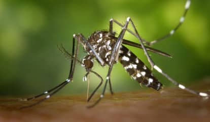 Advisory Issued For Suffolk Residents, Visitors After 15 Samples Test Positive For West Nile