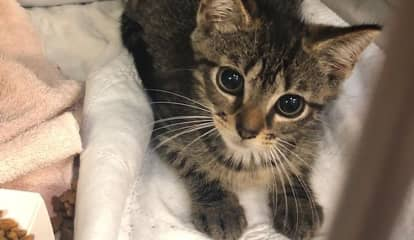 SPCA Of Westchester To Host 'Clear The Shelter' Adoption Event