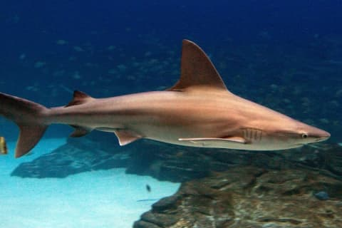 Man Charged With Having Seven Live Sandbar Sharks In His Pool With Intent To Sell Them