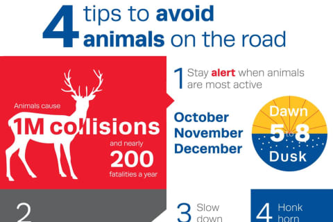 It's Worst Time Of Year For Vehicle Vs. Deer, Animal Collisions: Here Are Tips To Prevent Them