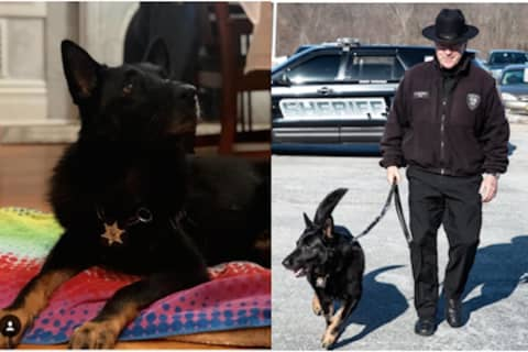 Orange County K-9 German Shepherd Officer Scout Dies At Age 10