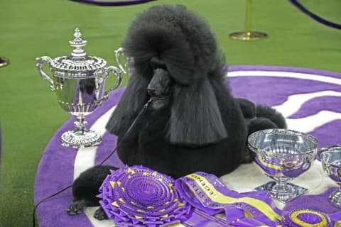 Famed Westminster Kennel Club Dog Show Coming To Westchester's Lyndhurst