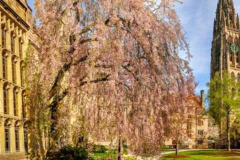 COVID-19: Yale To Require Students Get Vaccinated Before Fall Semester