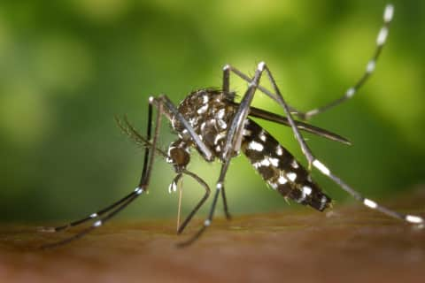 Bergen Has Most West Nile Positive Mosquitos In New Jersey, Passaic Has None