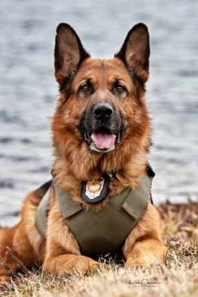 K9 Officer Helps Catch Teen Car-Theft Suspect On I-84