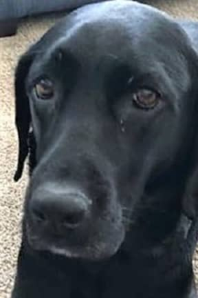 K9-Loving Military Family Fights For Return Of Bomb-Sniffing 'Mattie Cakes'