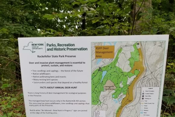 Are Deer A Threat To Westchester Wilderness? State Parks Department Apparently Thinks So
