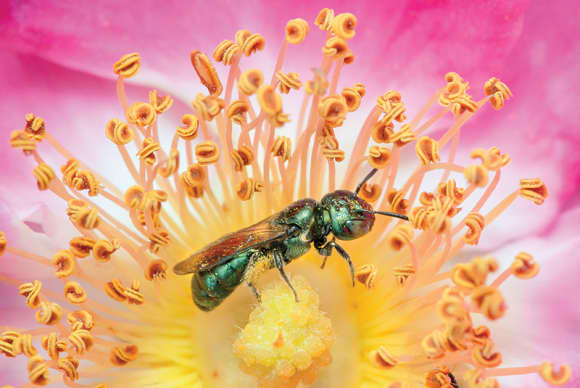 An exhibit sheds light on 'the secret life of bees'