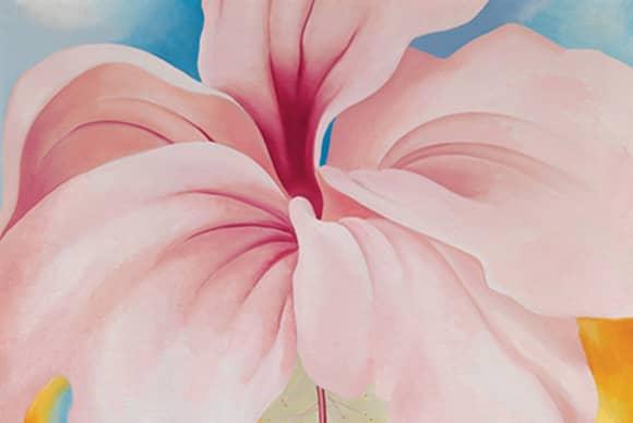 A desert flower at home in Hawaii