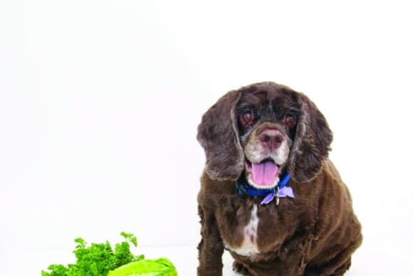 Pet of the Month – July 2014