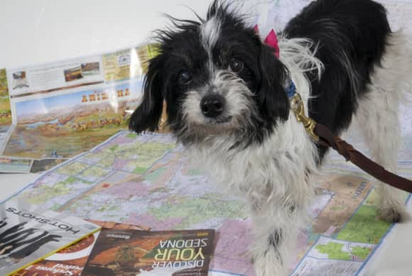 Pet of the Month – June 2014