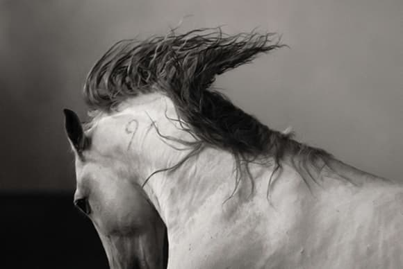 Seeing the unseen in equestrian art