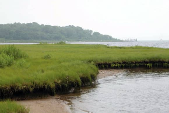 CT, NY lawmakers seek $20M from Trump to protect LI Sound