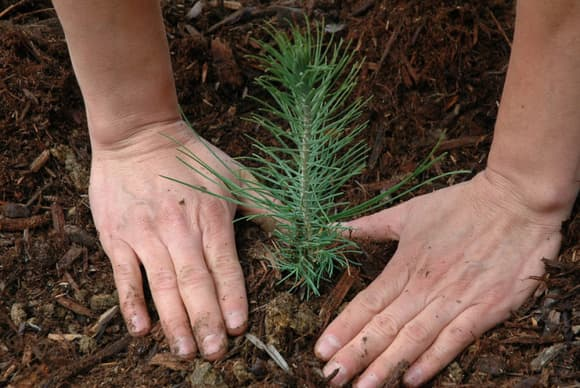 Synchrony partners with American Forests on tree-planting campaign