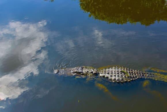 South Florida's blooming wetlands