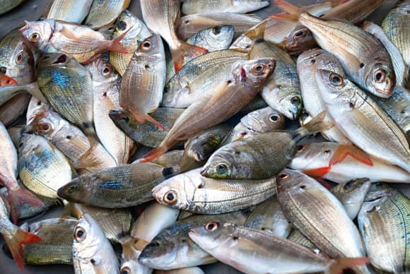 Nordic Fish Market opening in Fairfield