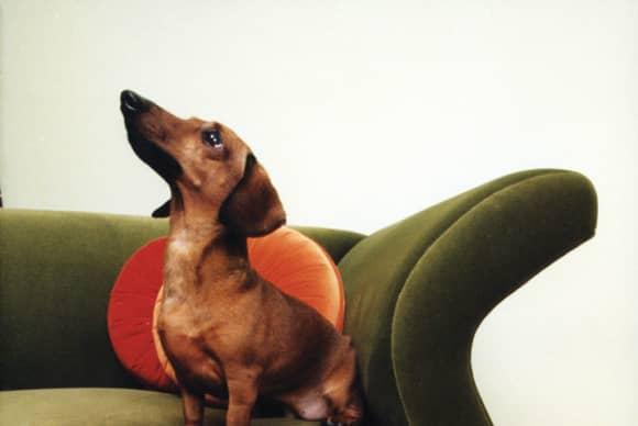 Annie Leibovitz for pets