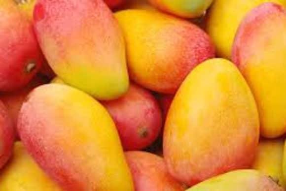 Mt. Vernon mango mavens sue former manager for $3 million