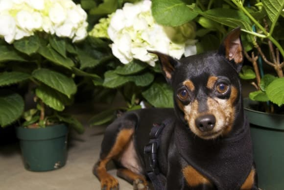 Pet of the Month May 2014