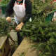 A DePiero Country Farms employee works at the Montvale farm up until the last minute.