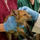 Vet techs at the Franklin Lakes Animal Hospital meet a baby fox.