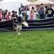 Dogs got to show off their skills at the 2016 Bark for Education Canine Carnival and Dog Show.