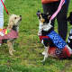 Many two- and four-legged attendees experienced the 2016 Bark for Education Canine Carnival and Dog Show.