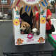 Part of the event included a doggie hugging booth.