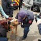 State Police K9 bloodhound Texas is greeted after he is found safe on Friday morning.