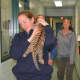 Zookeeper Bethany Thatcher carries one of two Amur tiger twins to meet the media Thursday at Beardsley Zoo.