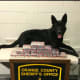 A K-9 officer with the 10 kilos of cocaine seized.